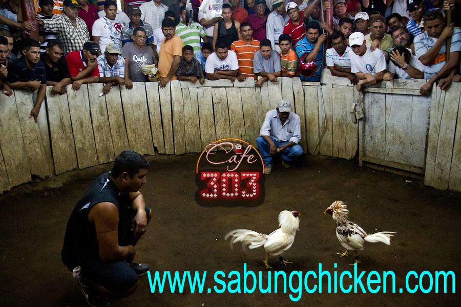 Bertaruh Adu Ayam Dapat Bonus Setiap Hari
