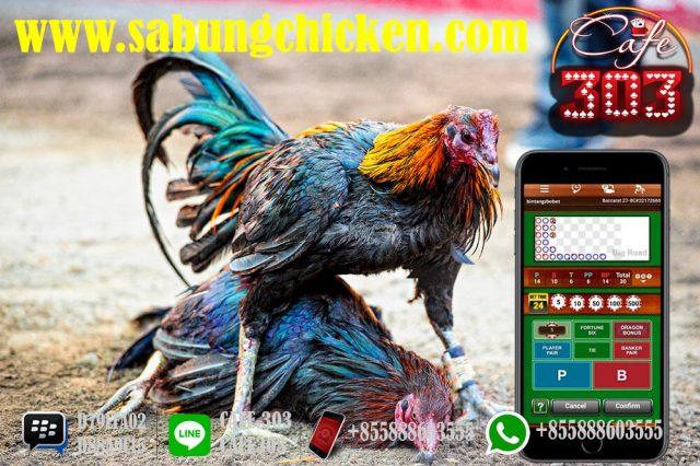 Judi Ayam Resmi Di Indonesia