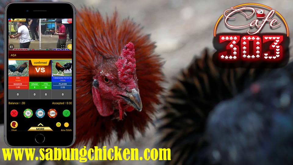 """Judi Sabung Ayam Di Android width = """"960"""" height = """"540"""