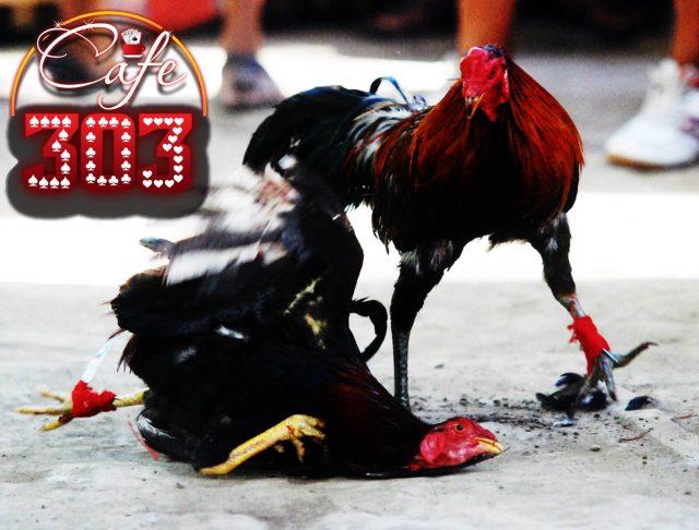 Promo Bonus Sabung Ayam 2