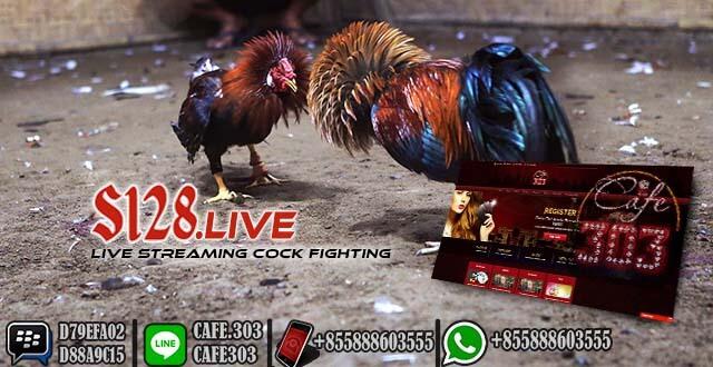 Situs Cafe303 Sabung Ayam