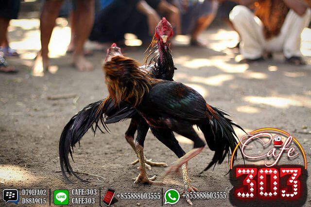 Situs S1288 Terbaik di Indonesia