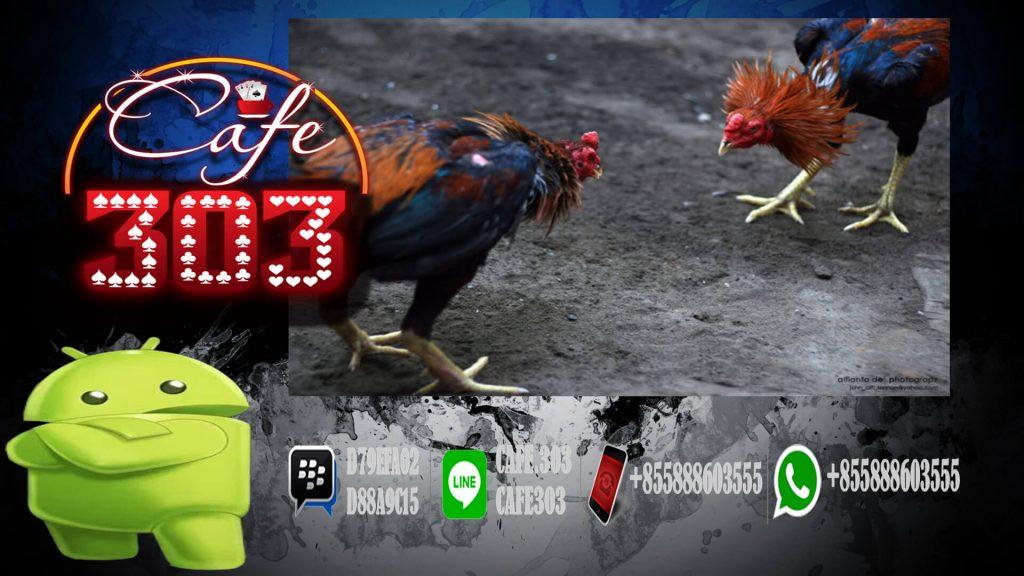 Sabung Ayam Online Indonesia Bonus Besar