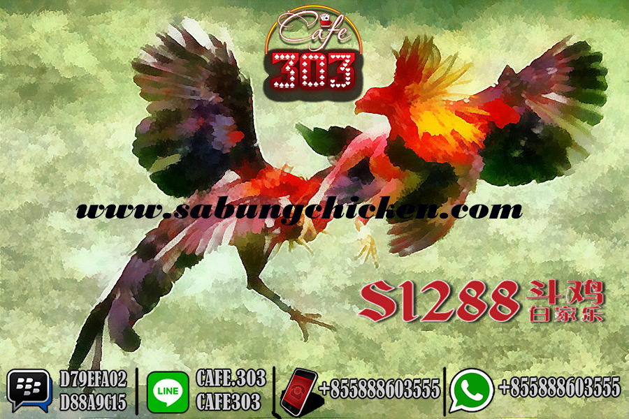 Bonus S1288 sabung Ayam