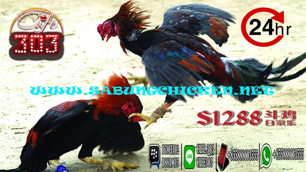 Bonus Terbesar Sabung Ayam